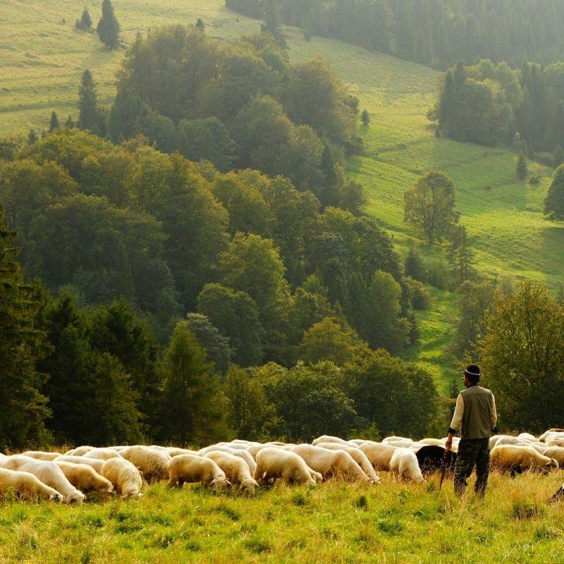 C'è chi è nato per studiare e chi è nato per zappare: nasce la prima scuola di pastorizia in Italia