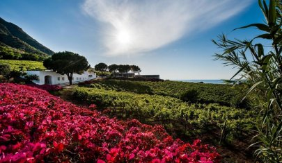 Il wine resort celo, manca? Eccone di bellissimi per godersi l'estate con un calice di vino