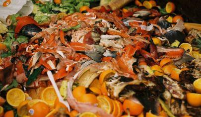 Woir lancia l'allarme: lo spreco alimentare impatta sull'ambiente