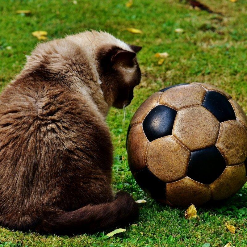 I migliori locali in cui vedere le partite di calcio nella provincia di Barletta Andria e Trani