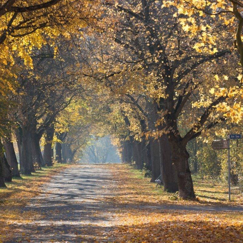 Magia d'autunno: 8 agriturismi dove mangiare immersi nella campagna a Pescara e dintorni