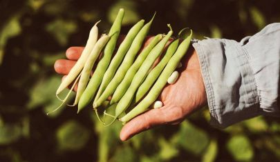 On My Plate: Slow Food presenta la sua prima challenge internazionale