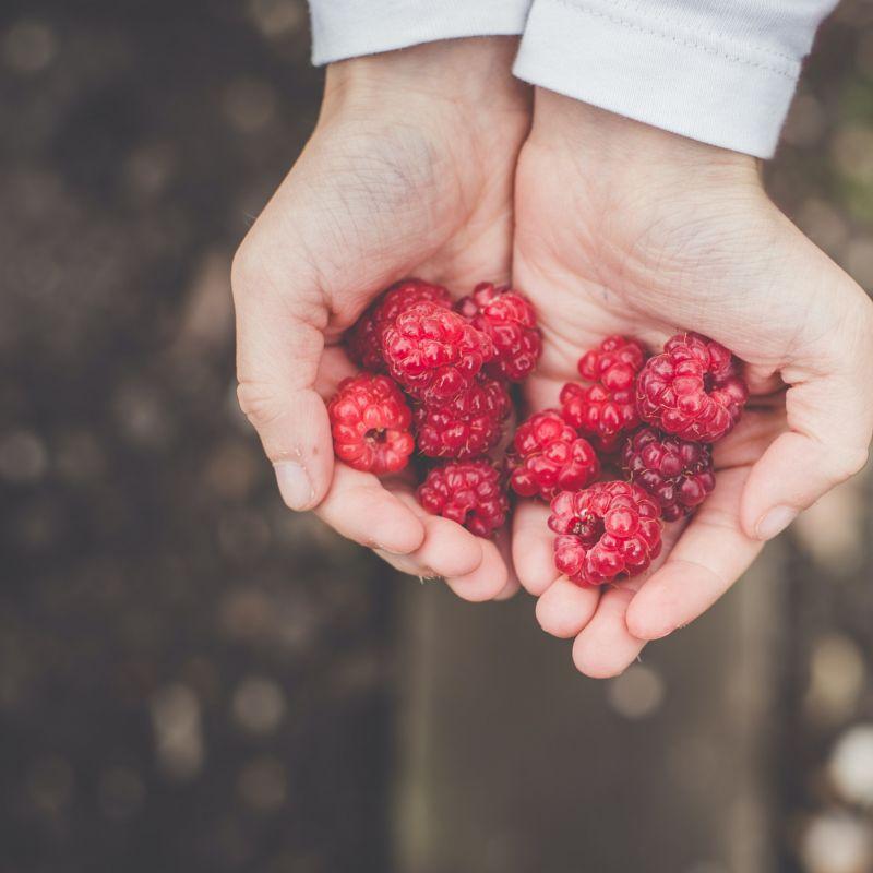 Cosa mangeremo per preservare il pianeta? La sostenibilità delle nostre abitudini alimentari