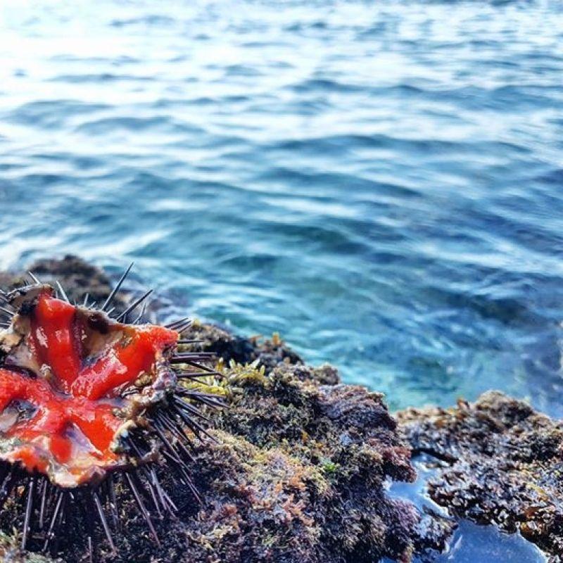 Scorpacciate garantite nei mesi con la R: 5 modi per mangiare i ricci di mare a Lecce