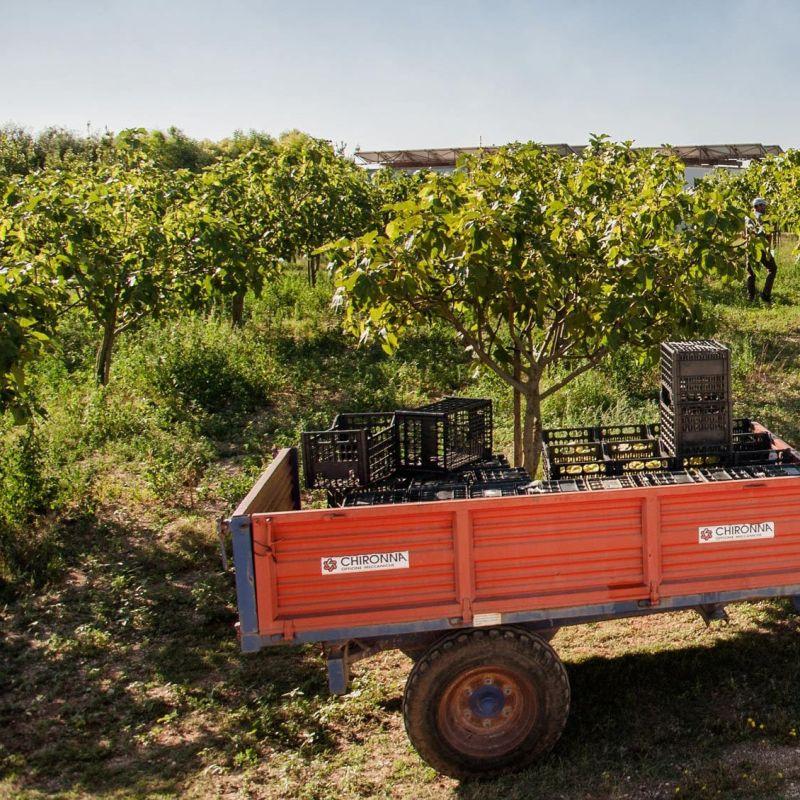 Prodotti e servizi made in Salento: 10 aziende del territorio che dovresti conoscere