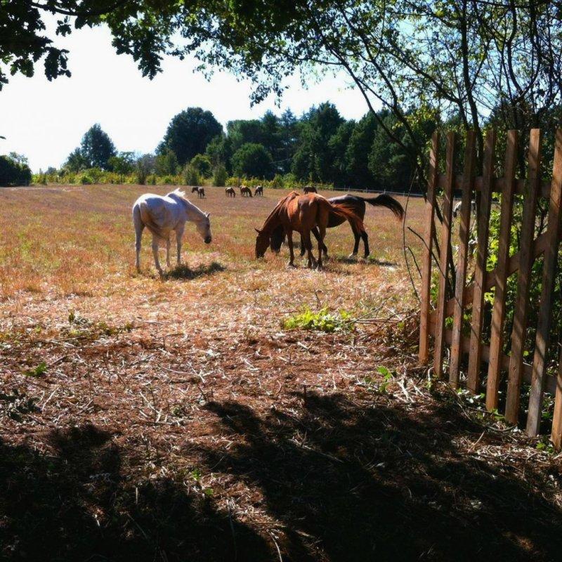 Un weekend a cavallo: gli agriturismi del Lazio con maneggio