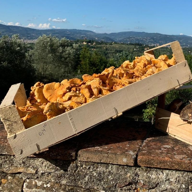 Se i funghi non li trovi nei boschi consolati in questi ristoranti di Firenze