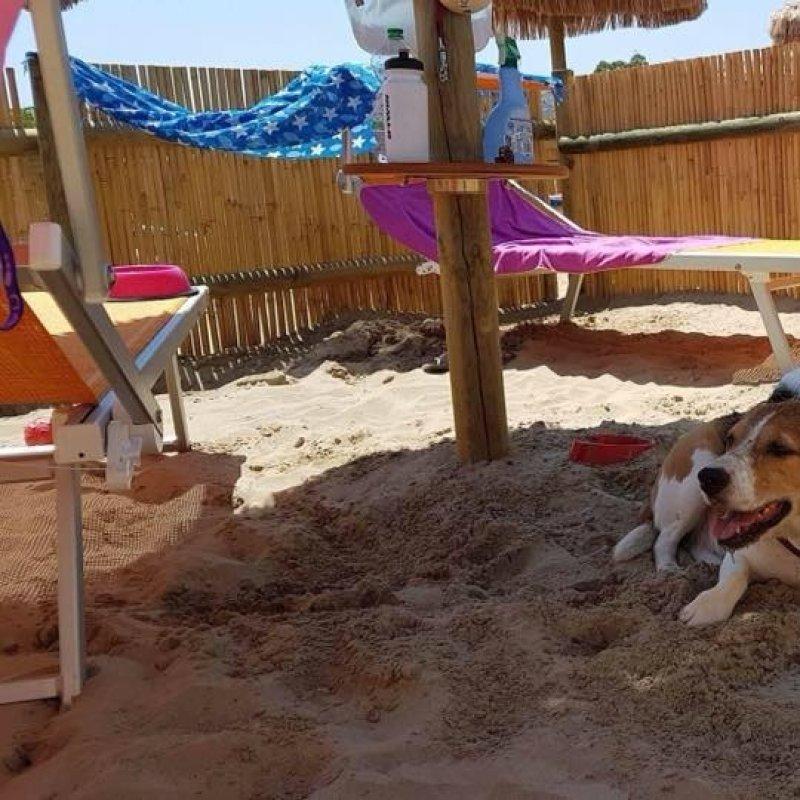 In vacanza con l'amico a 4 zampe? Ecco dove andare con i cani in spiaggia a Pescara