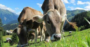I traguardi europei del 2020 in merito al benessere degli animali