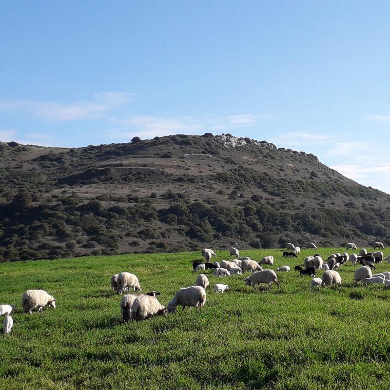 Dalla Sardegna tre formaggi diventano nuovi Presìdi Slow Food