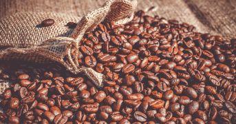 Il caffè come non lo avevi mai immaginato: ecco Faro Caffè Specialty