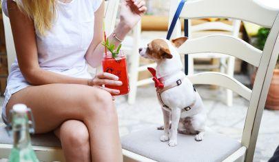 Locali dog friendly a Firenze, aperitivo con Fido per sentirsi una volta tanto solo con un cane