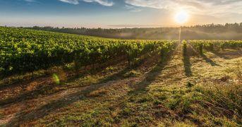 La Valpolicella del vino in formato digitale