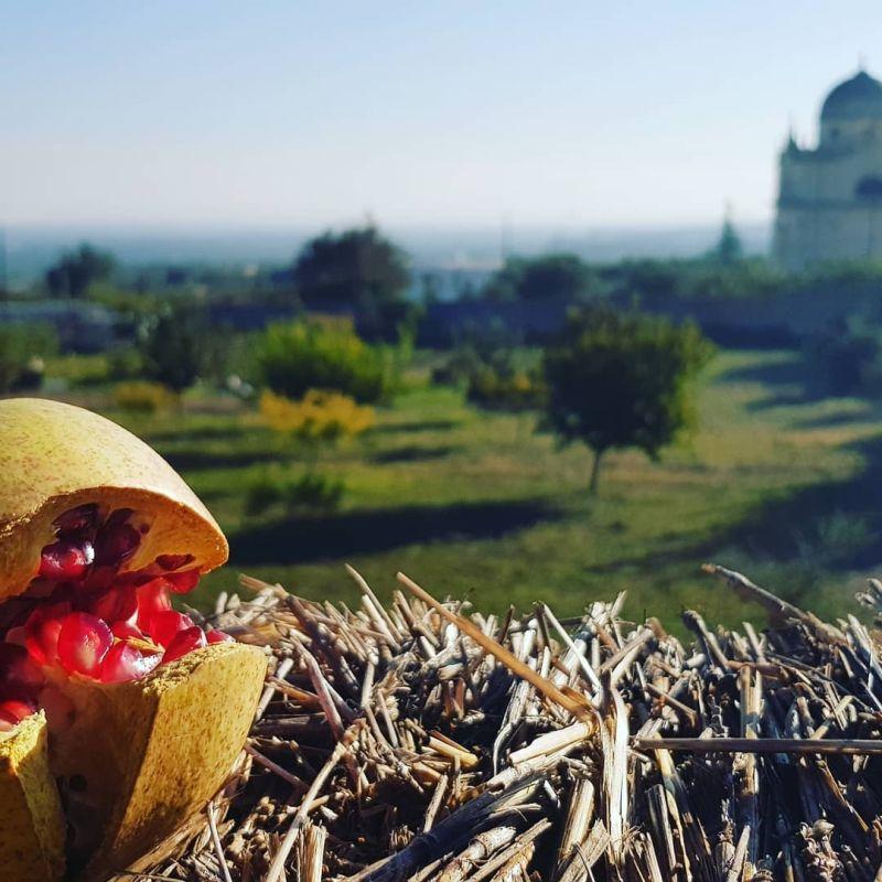 'Giardini della Grata': gli orti medievali recuperati a Ostuni, Parco della biodiversità