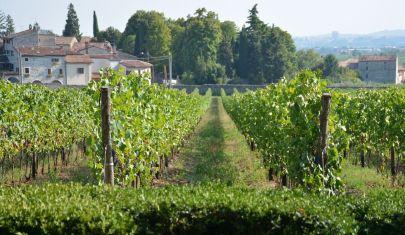 Industria del Vino: i numeri della crisi nella Valpolicella Annual Conference