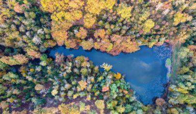 I boschi più belli d'Italia per ammirare lo spettacolo del foliage d'autunno